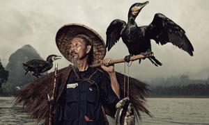 Nghệ thuật săn cá bằng chim cốc trên dòng Ly Giang