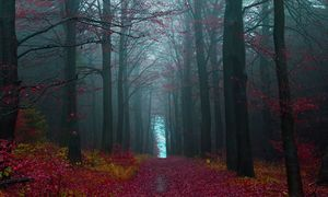 10 khu rừng đẹp ma mị