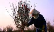 Dạo chơi 6 làng hoa ven Hà Nội dịp giáp Tết