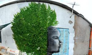 Bức tranh đường phố lấy cảm hứng từ thiên nhiên