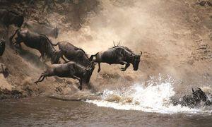 8 điều cần lưu ý khi du lịch ở Kenya