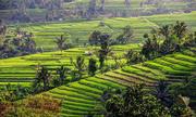 Trải nghiệm nên thử trong 24h ở đảo Bali