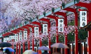 Tháng 10 đi đâu ở Nhật Bản