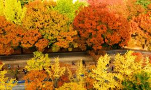 Những địa điểm ngắm lá vàng mùa thu tại Seoul