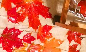 Lá rụng thành quà lưu niệm đặc trưng mùa thu