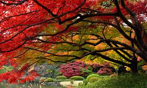 Những địa điểm ngắm mùa lá đỏ, vàng ở Tokyo