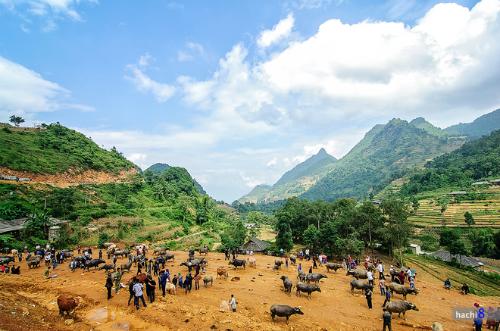 Chợ gia súc Cán Cấu ở Si Ma Cai là một trong những điểm đến nổi tiếng ở Lào Cai.