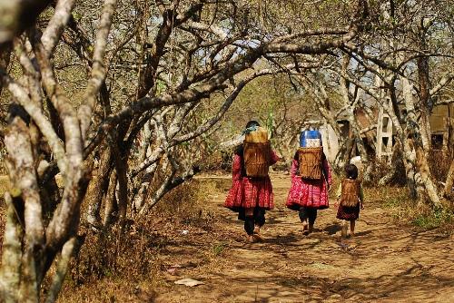 Bản Tả Phìn: Bản Tả Phìn là nơi sinh sống chủ yếu của người dân tộc Dao đỏ và cả người HMông, nằm ven thị trấn Sa Pa. Con đường vào bản Tả Phìn men theo sườn núi quanh co bên những thửa ruộng bậc thang xanh mướt. Những cây đào, cây mận ven đường nở những chùm hoa rực rỡ trong cái rét miền sơn cước như đón chào du khách. Ảnh: Ngaymua