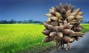 Ảnh nông dân miền bắc đạt giải quốc tế ảnh du lịch của năm