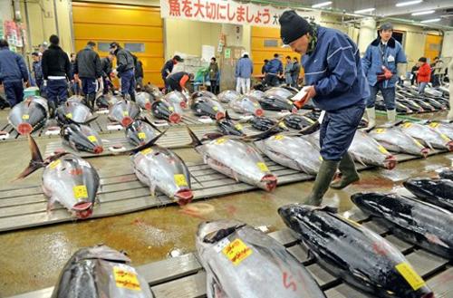 cho-ca-tsukiji-80-tuoi-mo-phien-dau-gia-cuoi-cung-1