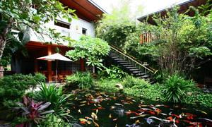 Quán cà phê hút khách bởi cây xanh và hồ cá ở Đà Nẵng