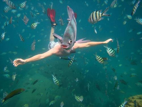 Chú cá tò mò không hề để tâm rằng mình đang che mất nhân vật chính của tấm ảnh phía sau.