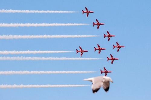 Chú chim mòng biển này đã choán mất vị trí của một chiếc máy bay Red Arrow trong buổi trình diễn nhào lộn máy bay Llandudno Air Show, diễn ra tại miền Bắc xứ Wales vào đầu năm ngoái. Tác giả của khung hình này chính là Jade Coxon, một sinh viên năm nhất theo học ngành nhiếp ảnh.