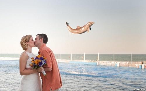 Vào năm 2012, Alexis và Steve Espey quyết định tổ chức đám cưới tại bể cá heo Marineland Dolphin Adventure, thuộc thành phố St. Augunstine, Florida (Mỹ). Bức ảnh được thợ chụp ảnh cưới ghi lại khi đôi vợ chồng mới cưới đang hôn nhau sau màn hôn lễ, chú cá heo tinh nghịch vô tình tạo nên một tấm hình đáng nhớ trong bộ ảnh cưới.