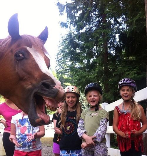 Chú ngựa không ngại nhe răng góp vui cùng các em nhỏ.
