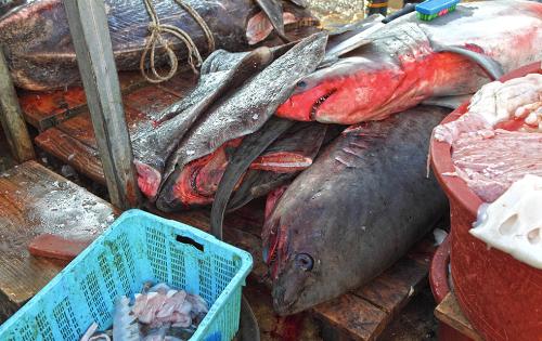 Những loại hải sản đặc trưng của chợ Jukdo là thịt cá voi, cá mập, bạch tuộc đá, cá mặt trăng.