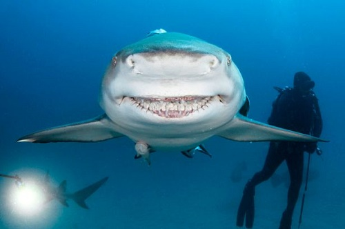 Chú cá mập được cho là có nụ cười giống Bruce, nhân vật cá mập ăn chay trong bộ phim hoạt hình
