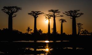 Những điều không ngờ về đảo quốc Madagascar