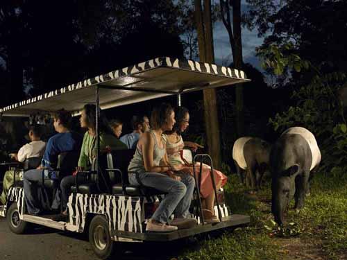 Giá vé: Người lớn là 45 SGD, trẻ em 3-12 tuổi là 30 SGD (giá đã bao gồm phí đi xe điện Tram Ride).  Địa điểm: 80 đường Mandai Lake