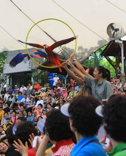 Giá vé: Người lớn là 29 SGD, trẻ em 3-12 tuổi là 19 SGD  Địa chỉ: 2 Jurong Hill