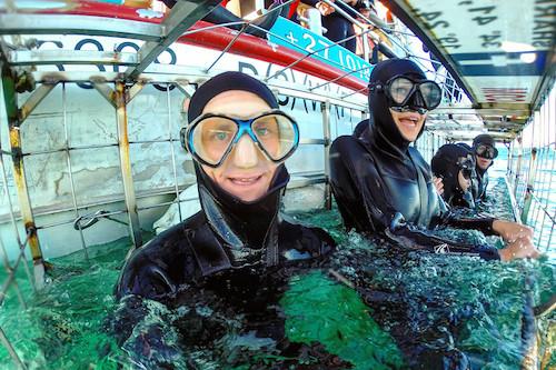 Du khách có thể quan sát cá mập ở khoảng cách rất gần. Ảnh: Matthew Karsten.