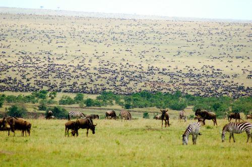 Khu bảo tồn Masai Mara của Kenya, nơi gia đình du khách người Trung Quốc đến thăm. Ảnh: Extraordinary.