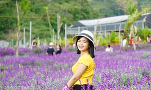 Hoa nở tím trên cao nguyên Lào Cai