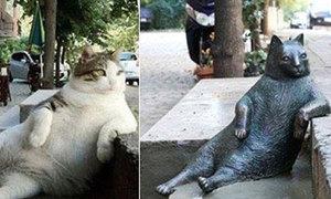 Con mèo nổi tiếng nhờ dáng ngồi lạ được dựng tượng