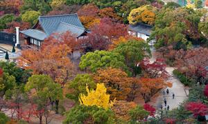 4 điểm đến lý tưởng để ngắm mùa thu ở Osaka