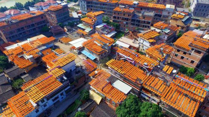 Mùa hồng khô vàng rực ở Trung Quốc