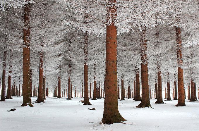 Những bức ảnh về mùa đông trên thế giới nhìn đã thấy lạnh