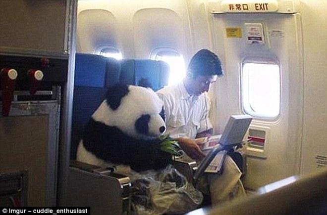 Những hành khách kỳ quặc trên máy bay