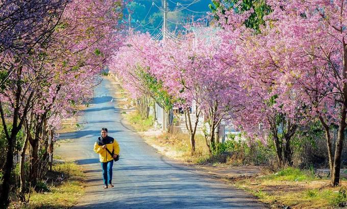 Ba loài hoa tháng 1 gọi khách lên đường