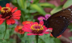 Vườn bướm lạ hút khách đầu xuân ở Nha Trang