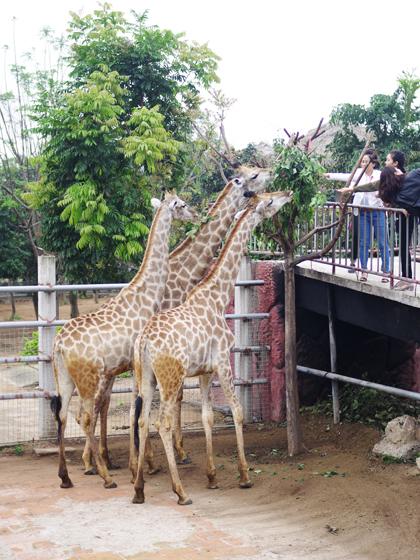 ba-vuon-thu-safari-ban-hoang-da-o-viet-nam-1