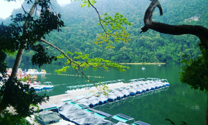 Hồ 'trinh nữ thụ thai' nhuốm màu truyền thuyết ở Malaysia