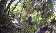 Khỉ đột tấn công khiến du khách hoảng loạn