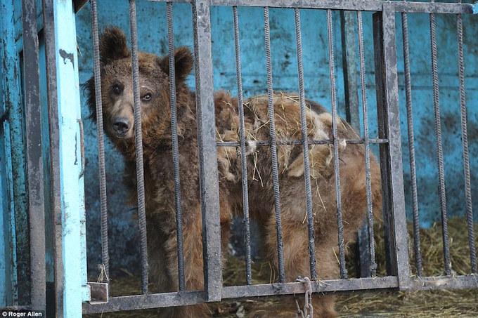 Ám ảnh bên trong vườn thú tồi tệ nhất hành tinh