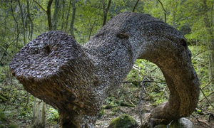 Ý nghĩa cây găm đầy tiền xu kỳ lạ ở Anh
