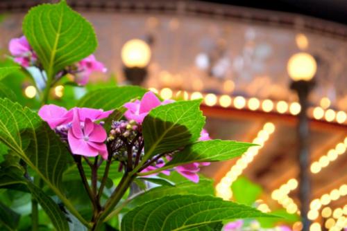 Toshimaen   Lễ hội hoa được tổ chức bên trong công viên giải trí Toshimaen với 10.000 cây hoa cẩm tú cầu thuộc 150 loại khác nhau. Nơi đây có rất nhiều điểm để du khách tham qua như các đồi hoa, những loài cẩm tú cầu lạ được lai giống. Một cảnh hiếm có mà du khách nhất định phải ghé là đường hầm dài 20m tạo nên từ những cây cẩm tú cầu leo. Sau khi tận hưởng không gian tràn ngập sắc hoa, du khách có thể vui chơi trong công viên với nhiều trò giải trí thú vị hoặc tới Toshimaen Niwa no Yu để tắm thư giãn. Lễ hội diễn ra từ cuối tháng 5 tới cuối tháng 6. Vé vào công viên là 1.000 yen/người (200.000 đồng).