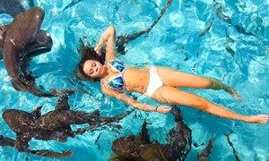 Du khách đổ xô tới Bahamas bơi cùng cá mập