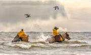 Nghề cưỡi ngựa bắt tôm 700 năm tuổi ở Bỉ