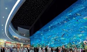 10 thủy cung lớn nhất thế giới