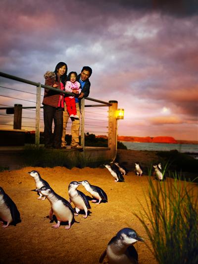 Phillip Island là một địa điểm lý tưởng để ngắm loài chim cánh cụt đặc trưng của xứ Nam bán cầu. Cách Melbourne 140 km (86 dặm) về phía Đông Nam, hòn đảo này còn là thiên đường của Kanguru, cá heo, hải cẩu, thú ăn kiến và gấu túi Koala.