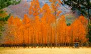 Khám phá mùa thu ở xứ sở kim chi