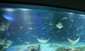Sai lầm khiến hơn 1.200 con cá chết trong thủy cung Nhật Bản