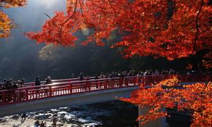 Những điểm đến phải check-in khi tới Nhật Bản