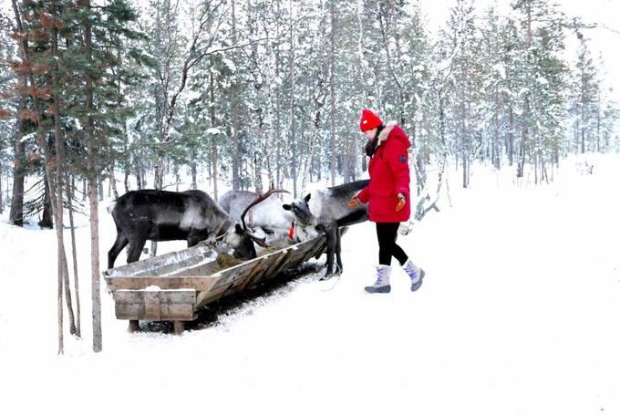 <p> Từng đặt chân qua gần 40 quốc gia, Crystal Huyền Trang lần đầu tiên tới ngôi làng của người Saami, Nga mùa đông năm nay. Nằm cách Murmansk - thành phố lớn nhất thế giới trong vòng Bắc cực - 110 km, làng Saami được mệnh danh là bảo tàng dân tộc ngoài trời, nơi bạn sẽ trải nghiệm một nền văn hóa bản địa độc đáo ở một trong những vùng đất khắc nghiệt nhất thế giới.</p>