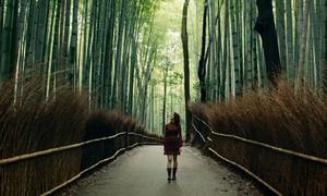 Quán ăn nằm sâu trong rừng ở Kyoto