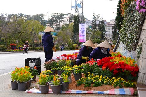 Đà Lạt dự kiến đón 100.000 du khách trong dịp Festival Hoa